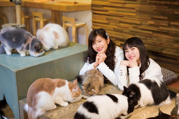 猫たちがごはんを食べるのを見守る2人。11:30か18:00に行けば見られる
