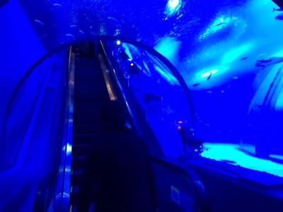 180度、水槽の中を通るエスカレーター。エイやシロワニ、マイワシなどが光っているように見える