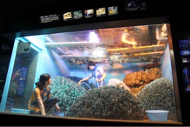 年に数回しか見られない、水槽の水を全部抜く貴重な光景!サンシャイン水族館「水槽ピカピカ大作戦!」