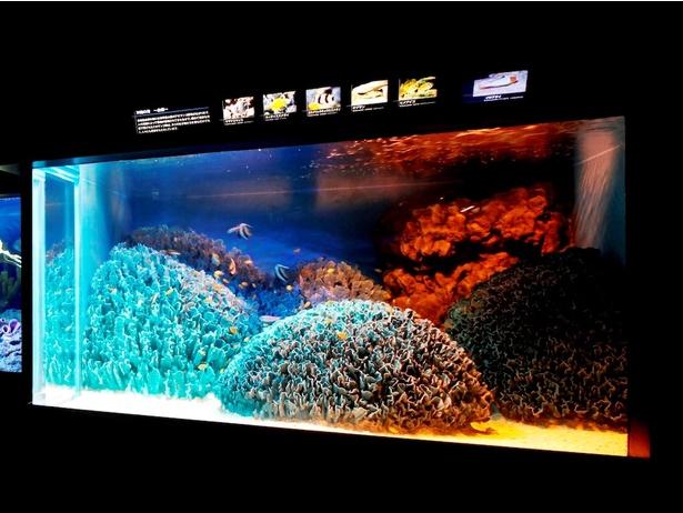 【写真を見る】年に数回しか見られない、水槽の水を全部抜く貴重な光景!サンシャイン水族館「水槽ピカピカ大作戦!」