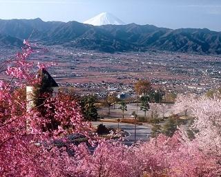 『ゆるキャン△』で話題の公園に「桃のきれいな時期に来るのです…」と観光協会がつぶやいたわけ