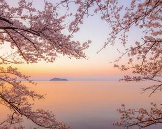 夜明けの海津大崎は、桜と湖の甘美な瞬間