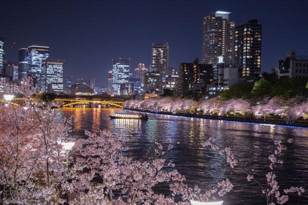 天満橋南側からは南天満公園の桜とビル群の輝きを一望できる