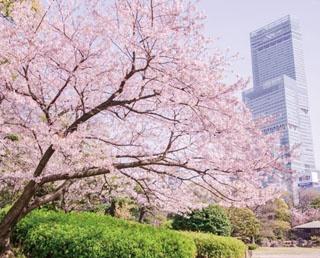 背後にあべのハルカスを望む日本庭園。春はさらに桜が趣きを添える