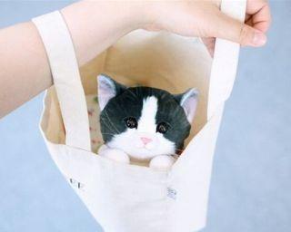 ムギュムギュ女子続出!「猫の日」にほしい人気No.1グッズ