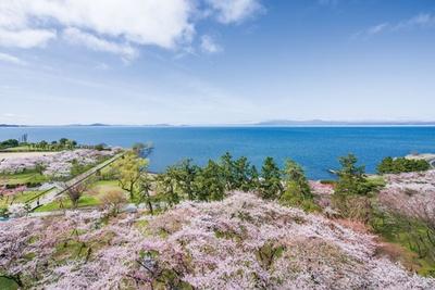 長浜城の天守閣(展望台)から眺める豊公園は、さながら壮観な桜の海
