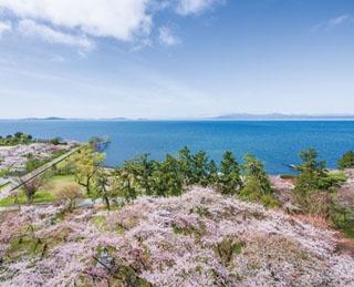 滋賀・長浜城から眺めたい!豊公園の桜が彩る琵琶湖の大パノラマ