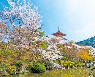 広い境内のいたる所で桜が咲き誇る