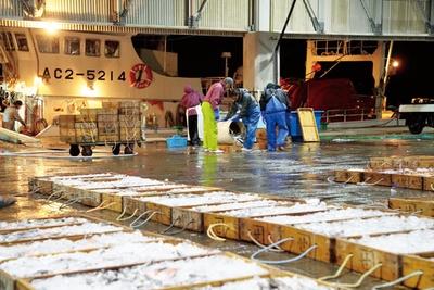 三河湾や遠州灘などの魚介類が年間1200トンも水揚げされる、形原漁港