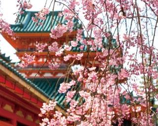 平安神宮や哲学の道も!京都・岡崎さんぽ