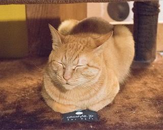 にゃんにゃんにゃんに合わせ開催!猫が似合う街・湯島の「ねこまつり」に行ってきた!