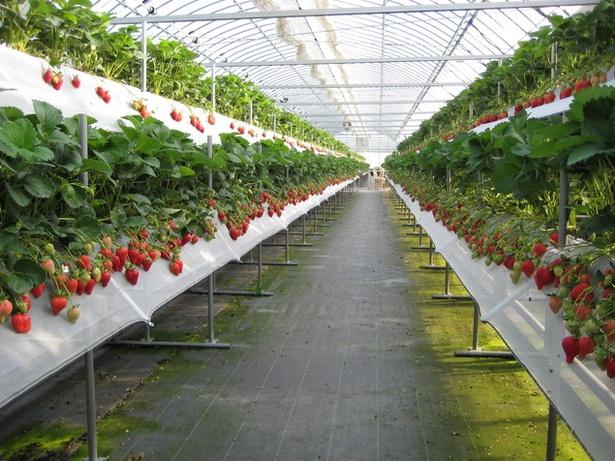 【写真を見る】スイーツショップも併設するいちご観光農園「筑紫野いちご農園」