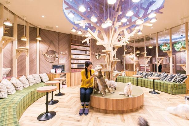 ツリー型のキャットタワーがそびえる店内/猫カフェ MOCHA 心斎橋店