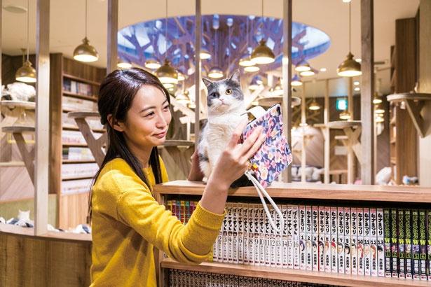 愛らしい姿を画像で動画で撮りまくろう/猫カフェ MOCHA 心斎橋店