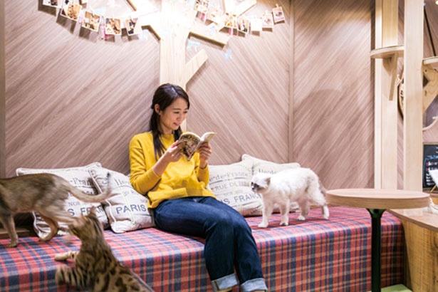 マンガや雑誌も読み放題/猫カフェ MOCHA 心斎橋店