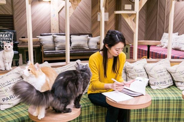 Wi-Fiや電源もあるので仕事や勉強をする人も/猫カフェ MOCHA 心斎橋店