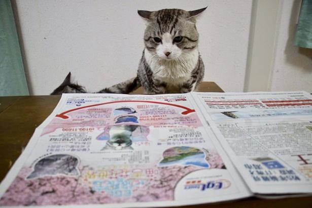 ニャン吉が掲載された新聞を熟読するニャン吉