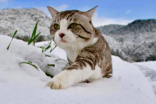 雪が積もってもパトロールは欠かせない