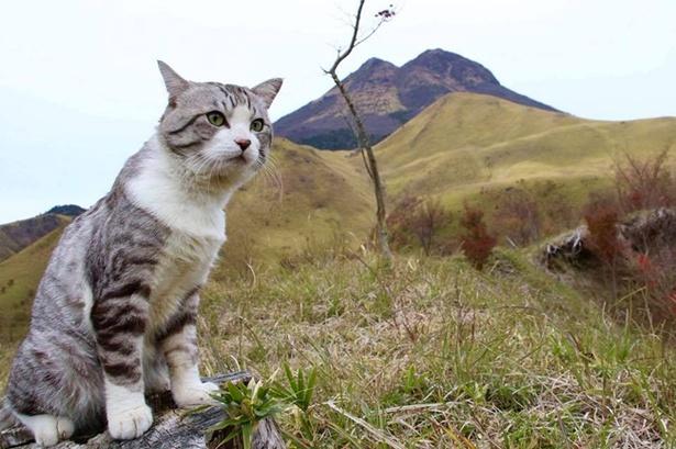 大分県由布市にある標高1,583mの由布岳にも登ってみた!