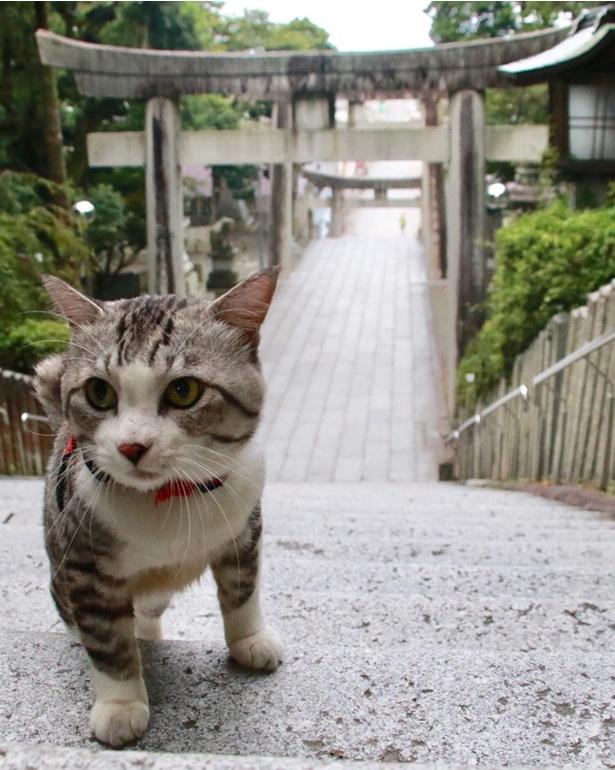 CMのロケ地として話題になった福岡県・宮地嶽神社