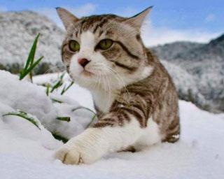 """【写真特集】2月22日は「猫の日」!""""旅猫 ニャン吉""""の最新ショットが到着"""