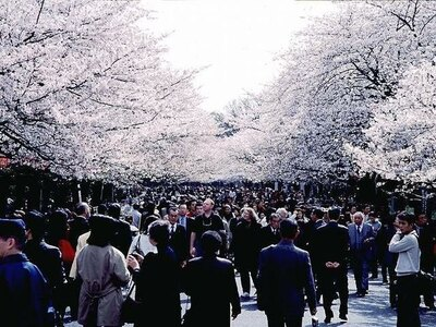 【写真を見る】毎年多くの人で賑わう、上野恩賜公園の桜