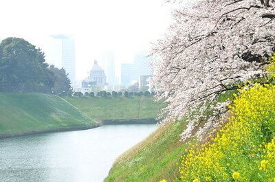 仕事帰りにも立ち寄れる人気の桜スポット、千鳥ヶ淵公園