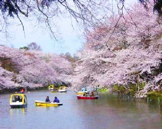 春直前!東京の最新桜開花時期予想&人気桜スポットをチェック