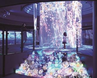 3月1日(木)からシーパラで開催。新感覚! 「SAKURA ISLAND 2018」で幻想的なお花見を楽しもう