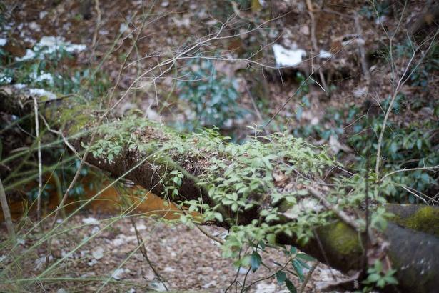 森林総合研究所 多摩森林科学園内の風景