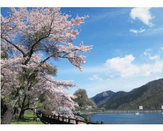 自然豊かで空気の澄んだ奥多摩へドライブ!春を探す旅