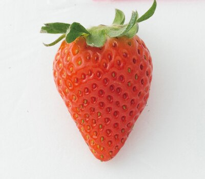 イチゴの香りが際立つ「かおり野」