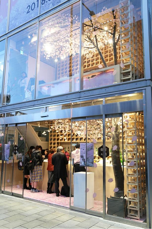 【写真を見る】店内に配される桜の木は1階から2階にかけてつながる1本の木に見えるようにディスプレイされる