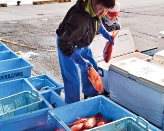 海のルビーを食べに静岡最南端へ!御前崎港で絶品漁港めし