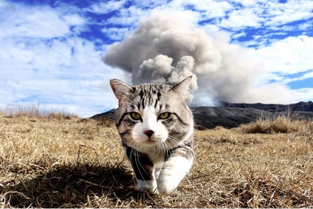 おしりから煙が!? 阿蘇山噴火の瞬間をとらえた1枚