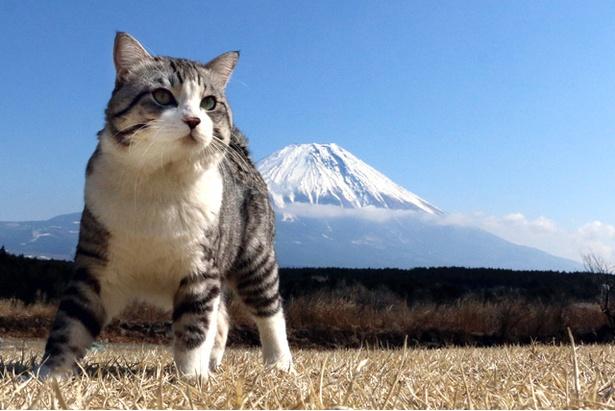 富士山をバックに堂々とした姿を披露