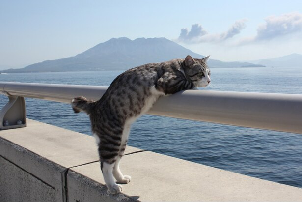 地元鹿児島で桜島と錦江湾を眺めながら一服