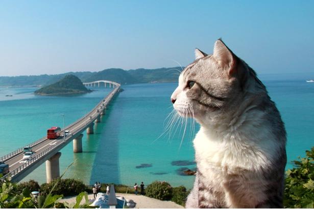 山口県・角島大橋の絶景を背に