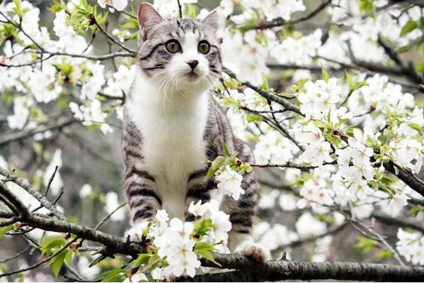 サクラの木に登ってみた