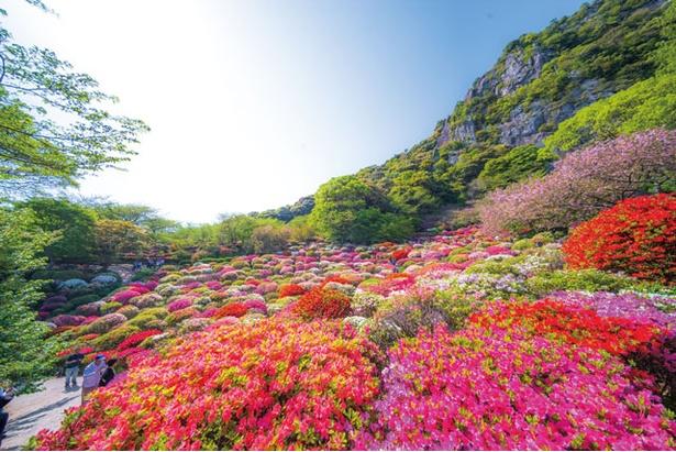 【写真を見る】サクラからツツジ、そして藤へと、色彩豊かな花々がバトンタッチするかのように園内を彩る