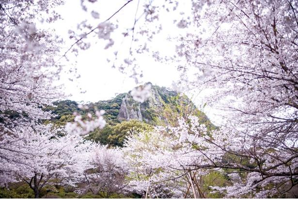 「御船山楽園」(佐賀県武雄市)で「御船山楽園花まつり2018」が開催。園内が美しい春色に染まる