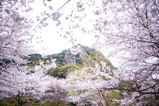 春のインスタ映えイベント!花々が咲き誇る「御船山楽園花まつり2018」が開催