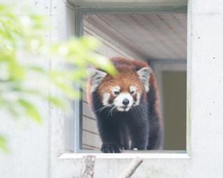 福岡・北九州市民に愛される、自然や動物たちと触れ合える「到津の森公園」