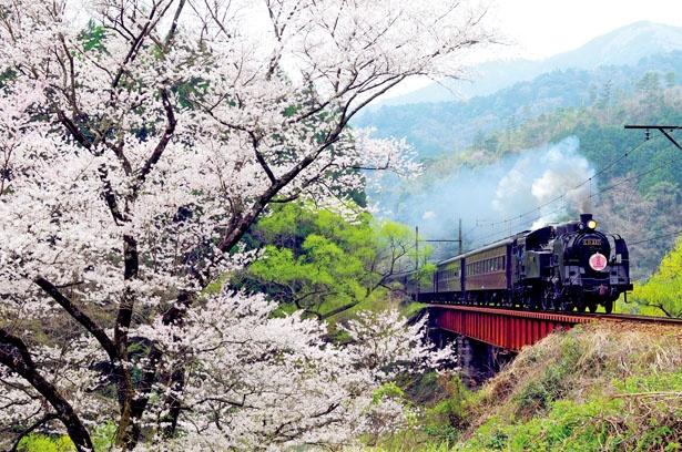 【写真を見る】のんびり旅を楽しみたい人は、大井川鐵道のSL列車に乗るのがおすすめ