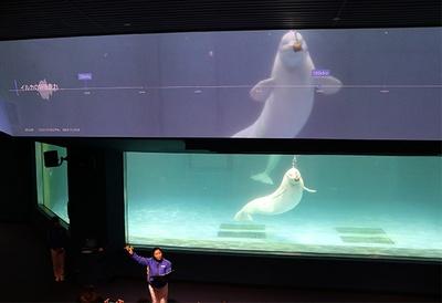 水槽上部の映像では、ベルーガたちの出す音の周波数をリアルタイムで映し出す
