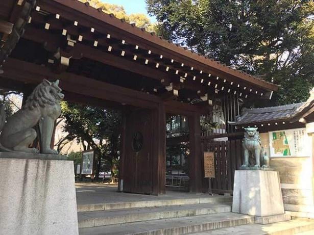 桜レポート!今年も靖国神社の標本木を見てきた!