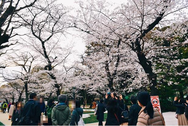 たくさんの人が訪れていた。満開の桜を撮影しようと手を伸ばす人たち