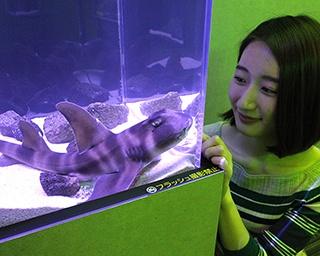 危険生物がいっぱいの会場に潜入! 大阪で「もうどく展」再び 猛毒生物が集結
