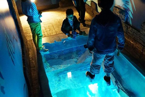 水槽の上を歩ける沈没船エリア/シーライフ名古屋