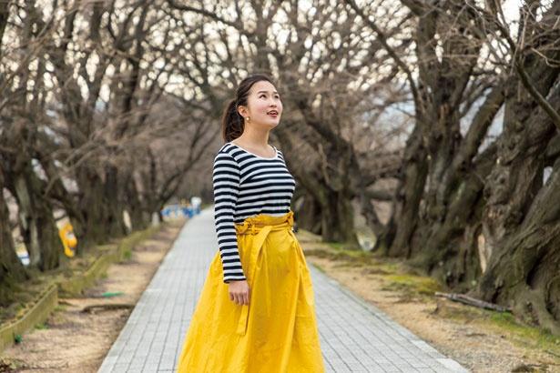 3月下旬から4月上旬には両側から伸びる枝が重なり、桜のトンネルに/淀川河川公園 背割堤地区